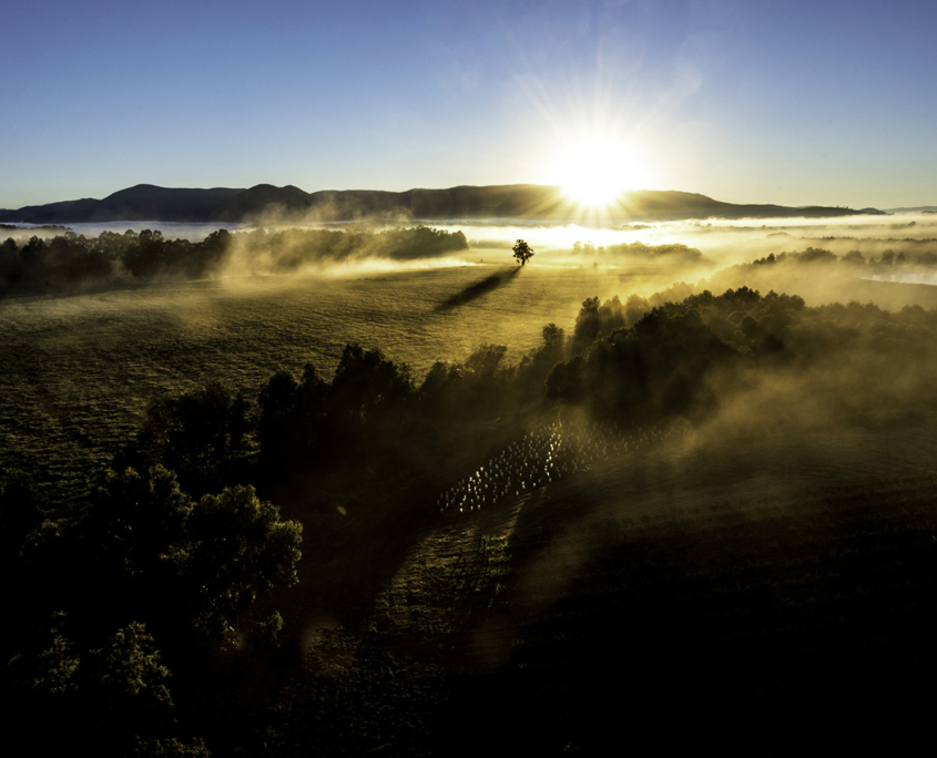 Yarra Valley Photographic Tour Misty Valley