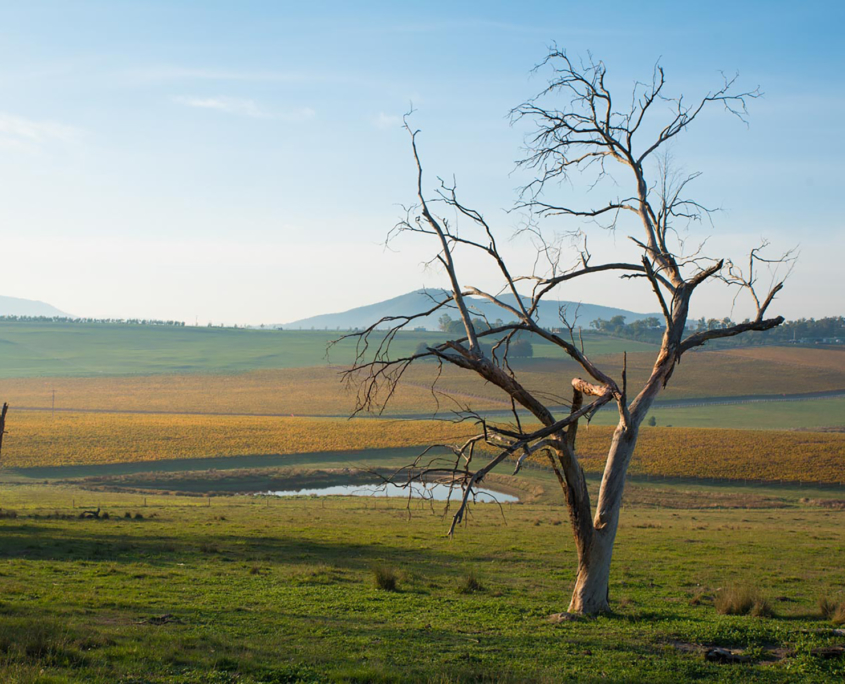 Yarra Valley Photographic Tour Tree
